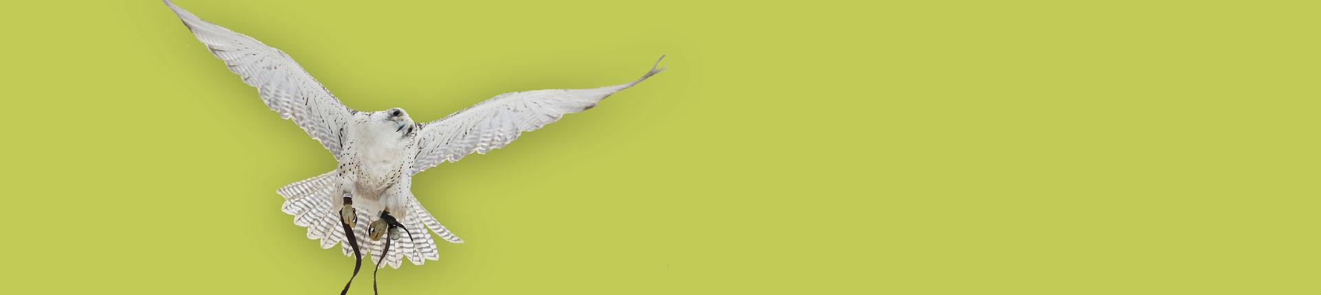 Falknervorführung